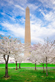 Washington DC in Spring - 193146858