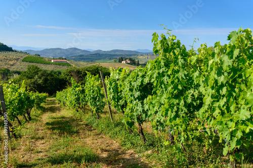 Keuken foto achterwand Wijngaard winnice Toskanii, Włochy