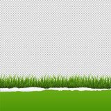 Green Grass And Ripped Paper Transparent Background
