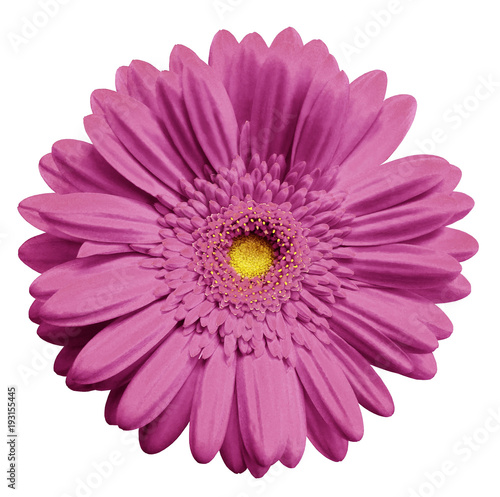 Fotobehang Gerbera Pink gerbera flower, white isolated background with clipping path. Closeup. no shadows. For design. Nature.