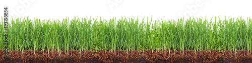 Łąka, trawnik, trawa z ziemią w przekroju