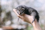 Newborn kitten in hands outdors. Animal photography - 193167481