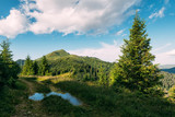 Picturesque summer landscape in sunny day in Carpathian mountains. Lush green forest from pine tree on backgound. Travel background concept - 193168221