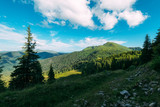Picturesque summer landscape in sunny day in Carpathian mountains. Lush green forest from pine tree on backgound. Travel background concept - 193168280