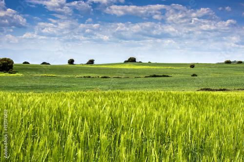 Fotobehang Pistache paisaje en españa