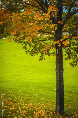 Tree with a few bright coloured leaves still holding in Autumn