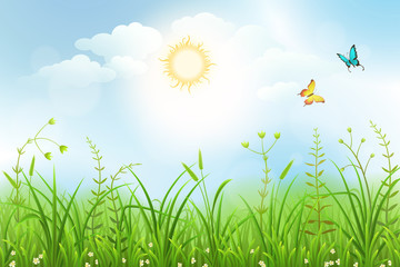 Spring meadow background with white flowers and green grass