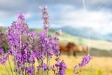 Lavender. - 193186839