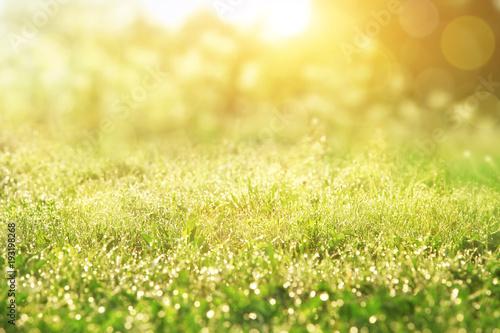 Papiers peints Jaune de seuffre Gras im Frühling