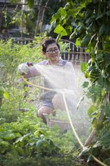 asian woman watering organic vegetable in home garden