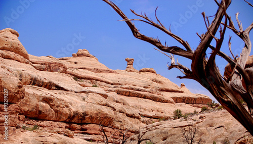 Fotobehang Zalm Juniper tree and red rock formations in canyon country Southern Utah.