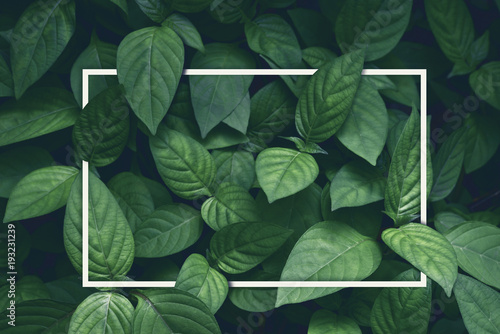 creative layout, green leaves with white square frame, flat lay, for advertising card or invitation