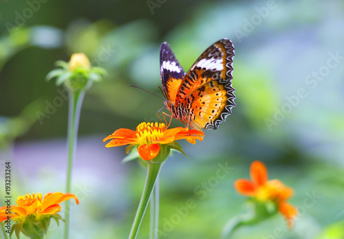Sticker butterfly, flower, insect, nature, summer, orange, macro, garden, beauty, animal, yellow, wildlife, green, wing, fly, spring, wings, flowers, plant, monarch, colorful, color, fauna, insects, red