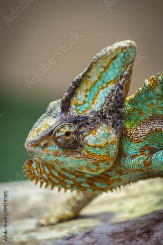 Fotobehang Kameleon vacation