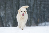 dog outdoors in winter - 193254451