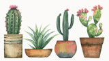 Watercolor vector set of cacti and succulent plants isolated on white background. - 193274668