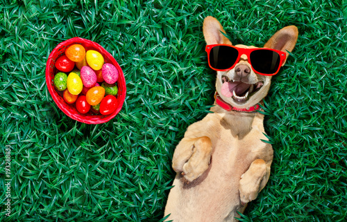 Staande foto Crazy dog hapy easter dog with eggs