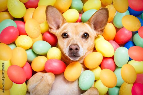 Papiers peints Chien de Crazy happy easter dog with eggs