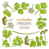 coriander elements set - 193312046