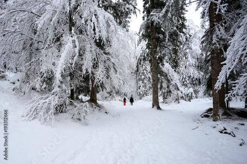 Tuinposter Weg in bos paesaggio invernale in Val Canali, nel parco naturale di Paneveggio - Trentino