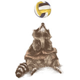 the Coon sitting and looking up with raised paws catches a beach ball, sketch vector graphics color picture - 193315263