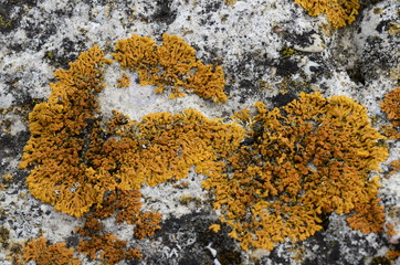 Mosses and lichens - mchy i porosty