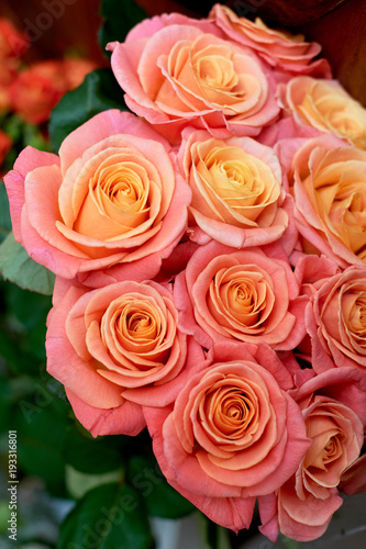 pink roses. Close to each other. Yellow middle