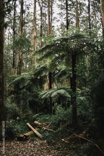 Foto op Canvas Khaki Australian Rainforest