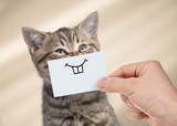 funny cat with smile on cardboard - 193384026
