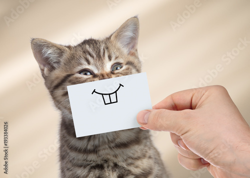 Leinwanddruck Bild funny cat with smile on cardboard