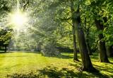 Sonne leuchtet durch Blätter auf Wiese