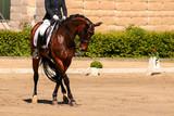 horse in dressage in different garden. - 193393471