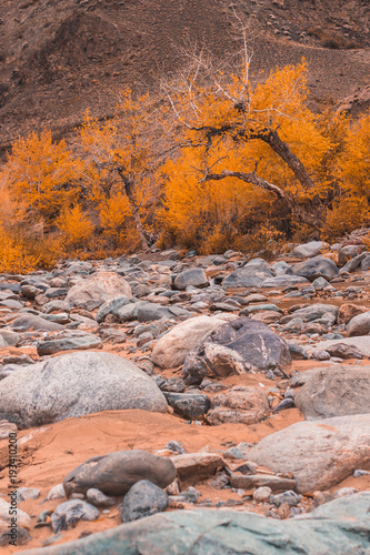 Fotobehang Zalm Dried up riverbed with stones and poplars on the shore. The theme of the autumn, yellow leaves, cloudy weather.