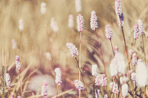 Beautiful purple flowers in a mountain area in the green grass on a summer day © Koirill