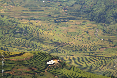 Deurstickers Rijstvelden Rice field curve terrace landscape view in Vietnam.