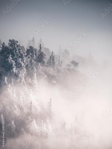 Lodowe drzewa w mgle od above 2