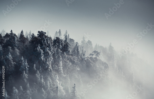 Drzewa lodowe 3