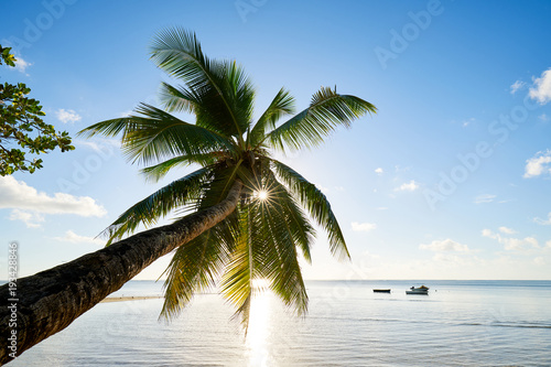 Palm and tropical beach, mahe, seychelles, indian ocean - 193428846