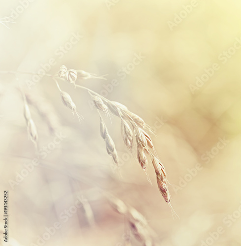 Grass. Fresh green spring grass. Soft Focus. Abstract Nature Background © B. and E.  Dudziński