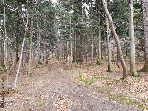 Tuinposter Weg in bos Las