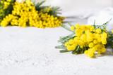 mimosa in primo piano e sfocata sullo sfondo - 193459453