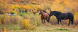 Two horses standing in fall foliage