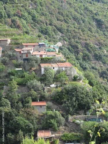 Keuken foto achterwand Olijf Case sul fianco della collina tra natura e vigneti
