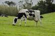 Vaca - 193481290