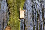 Budka lęgowa dla ptaków na starym drzewie - 193483651