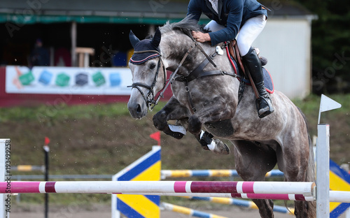 Aluminium Paarden horse in jumping tournament, over or between jumps..