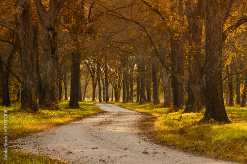 Fotobehang Herfst Country Road with Trees