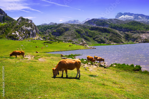 Foto op Canvas Bergen mountains landscape with lake and pasture