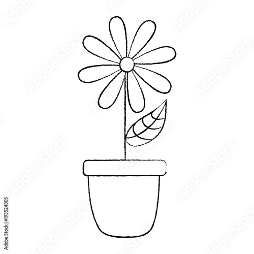 potted daisy flower petal leaves decoration vector illustration sketch design