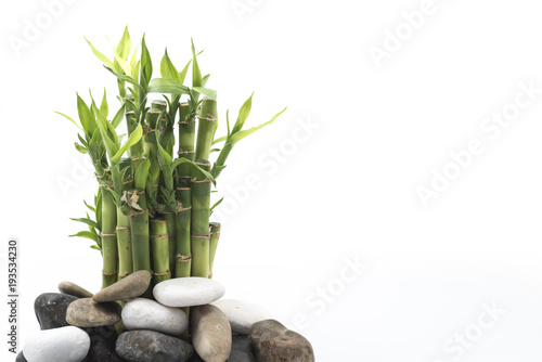 bamboo with stone isolated on white background